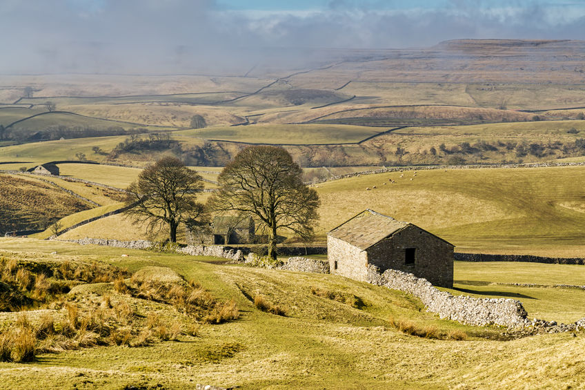 An isolated barn and trees in The Yorkshire Dales with a misty background.