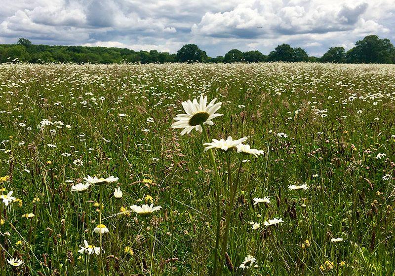 meadow800x600